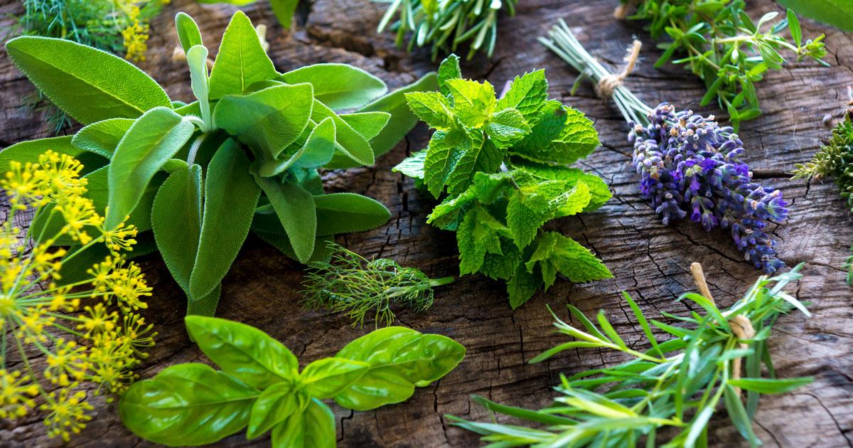 Lupus Natural Treatments Herbs